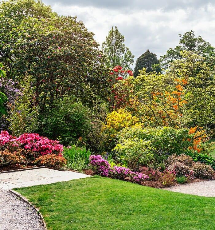 Walisische Mohnblumen in Kiesgarten
